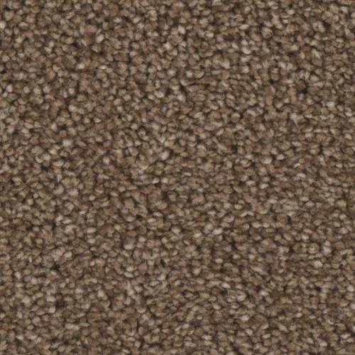 Front Runner in Sensation - Carpet by Phenix Flooring