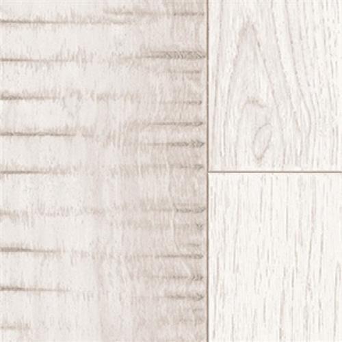 Forester Ceramic Cambrium