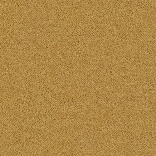 Cache Antelope 369