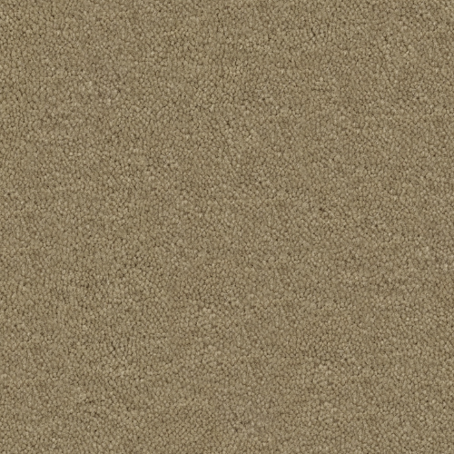 Cache Taupe 538