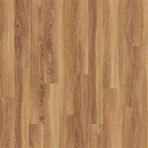 Salvador Cypress 00217