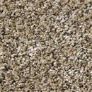 Carpet Because We Can I 12' & 15' Sea Shell  thumbnail #1
