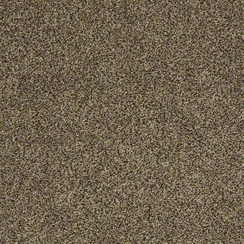 Polished Texture II Birch Texture 00770