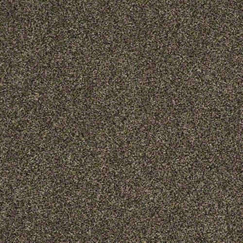 Polished Texture II Tree Bark Texture 00773