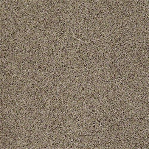All There in Sunset - Carpet by Shaw Flooring