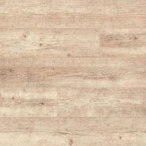 Calisto Pine