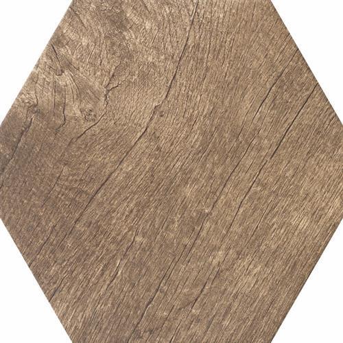 Palm Fossil - Hexagon