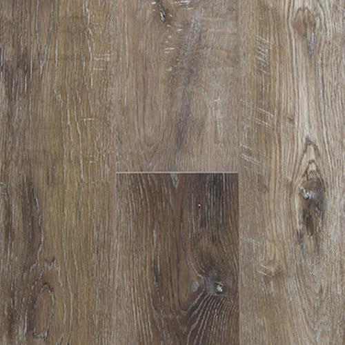 Everlasting Canyon Oak