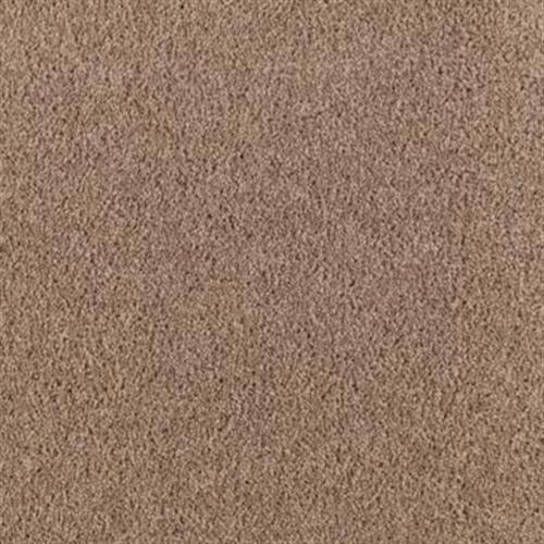 Witty Charm Cypress 552