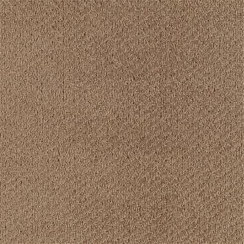 Softique Scotch Brown 872