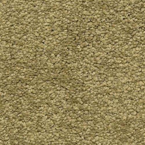 Cassina in Motif - Carpet by The Dixie Group