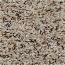 Carpet Step Above Coral Reef 506 thumbnail #1