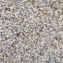 Carpet Astounding II Morning Dew 508 thumbnail #1