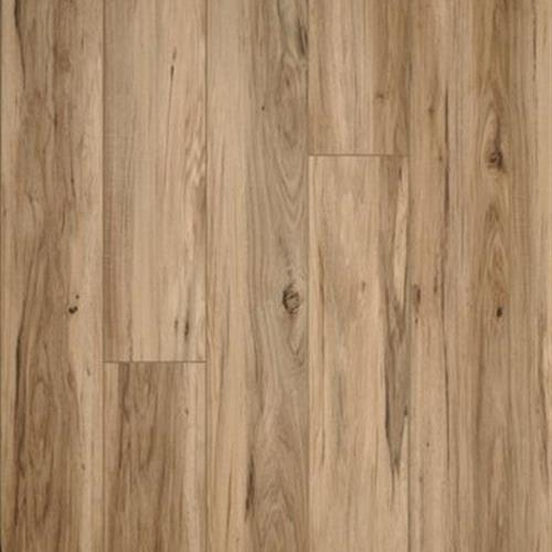 Natural Beauty - Timber Land Driftwood
