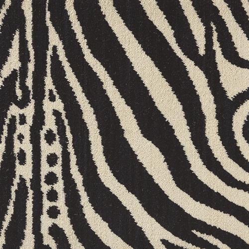 Wildlife Plains Zebra