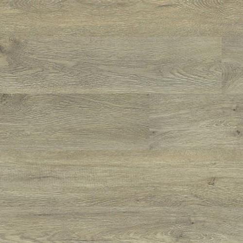 Plymouth Oak