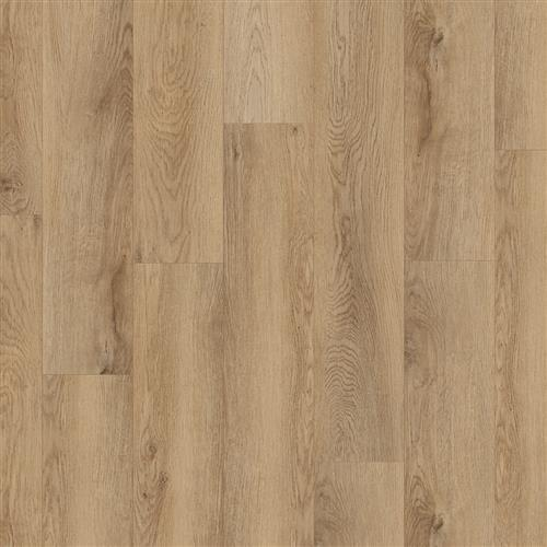 Cartwheel Oak