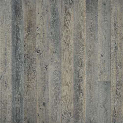 Silver Needle Oak