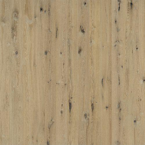 Spinnaker Oak