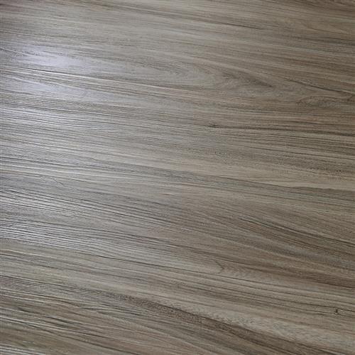 Pumilla Elm
