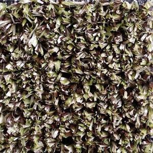 Carpet ARCHERY SFI1068 1068Decoy