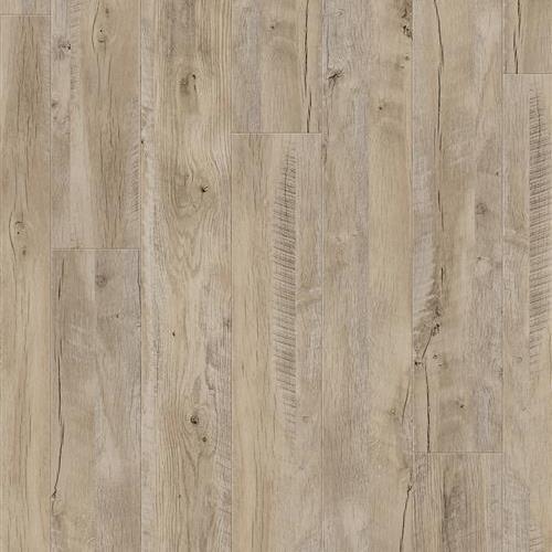 Stanley Park Driftwood