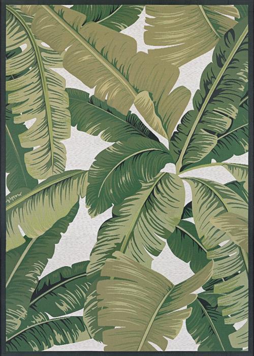 Dolce - Palm Lily