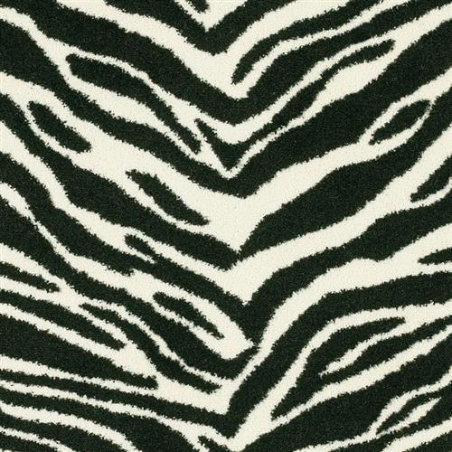 Cape Town Zebra