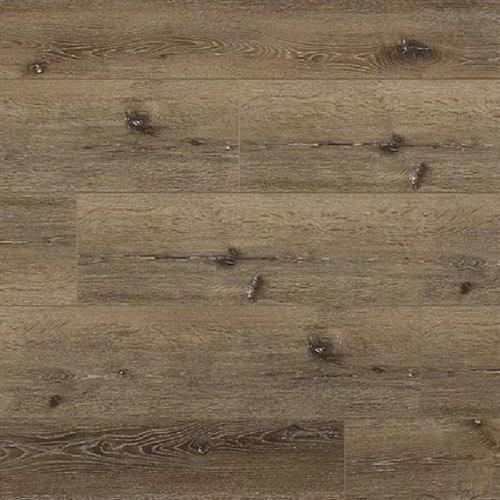 Great Oregon Oak Holm Oak