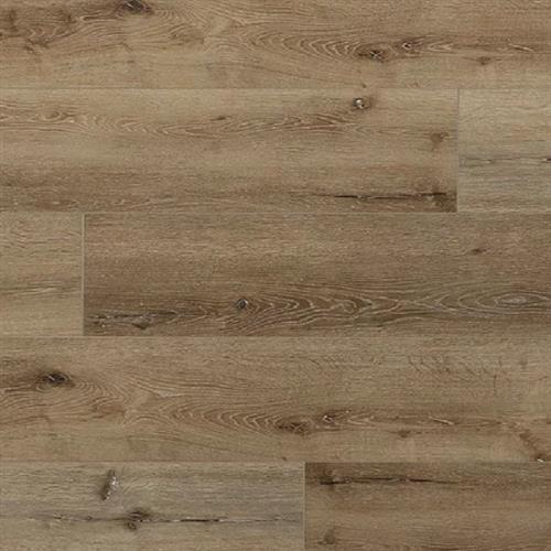 Great Oregon Oak Sessile Oak