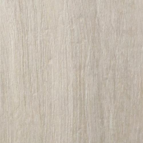 Galleno Birch
