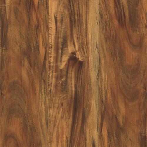 Cammeray Cinnamon Acacia