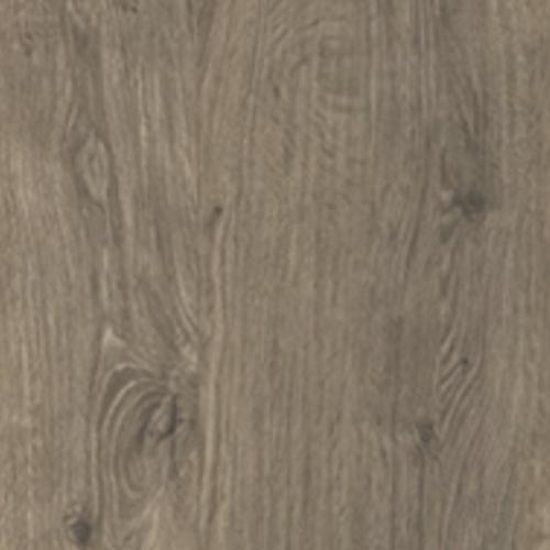 Gunbarrel Oak