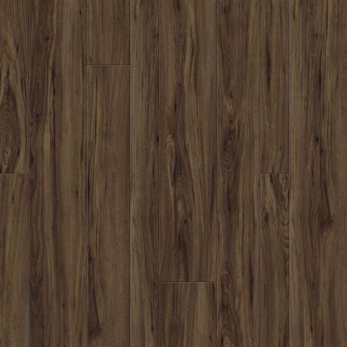Bark Elm