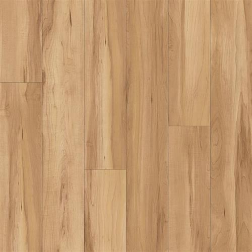 Valley Wood Sugar Maple