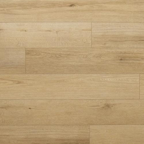 Clemont Plank Valbonne
