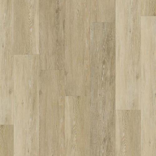 Coquina - Driftwood