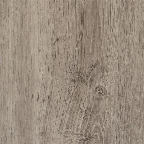 Silver Spur Oak